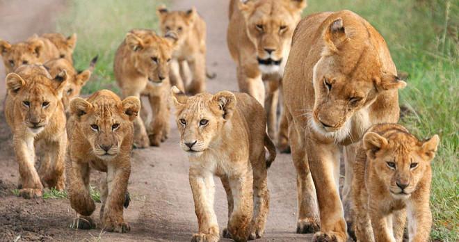 ... Safari Tours | Uganda and Rwanda Wildlife ToursNichols Expeditions