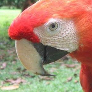 Costa-Rica-icon