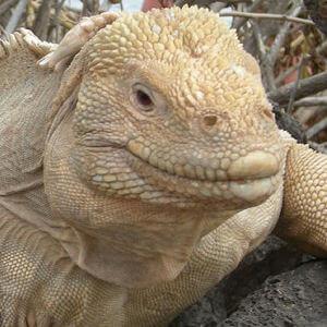 Galapagos-icon